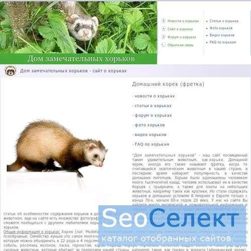 Фретка - домашний хорек - http://www.horek.biz/