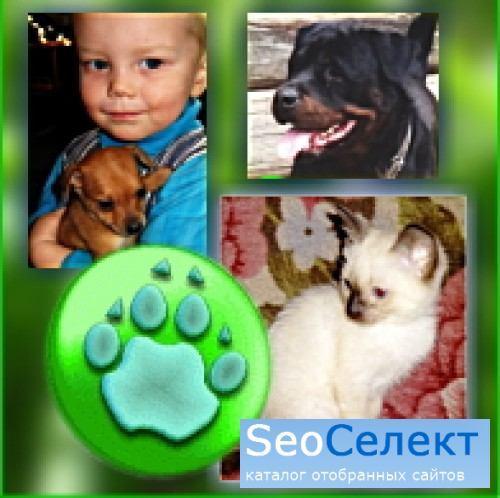 Домашние питомцы -  товары и услуги для владельцев - http://www.all-pets.by/