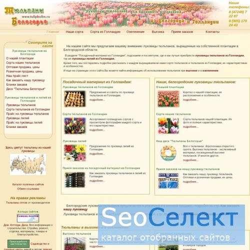 Луковицы тюльпанов из Белгорода - http://tulipbulbs.ru/
