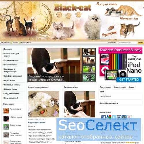 Кошки, коты, котята. Объявления о продаже котят - http://www.black-cat.ru/